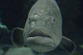 Hello, big fish