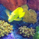 Downtown Aquarium - 116_3931.JPG
