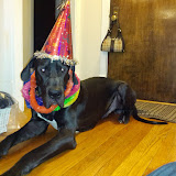 Dynamite Danes Family Album #4 - Bentley%2527s%2Bbirthday%2B2.jpg