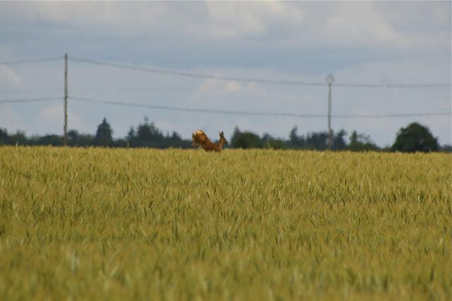 Les Hautes-Lisières (Rouvres, 28), 11 juin 2011. Photo : J.-M. Gayman