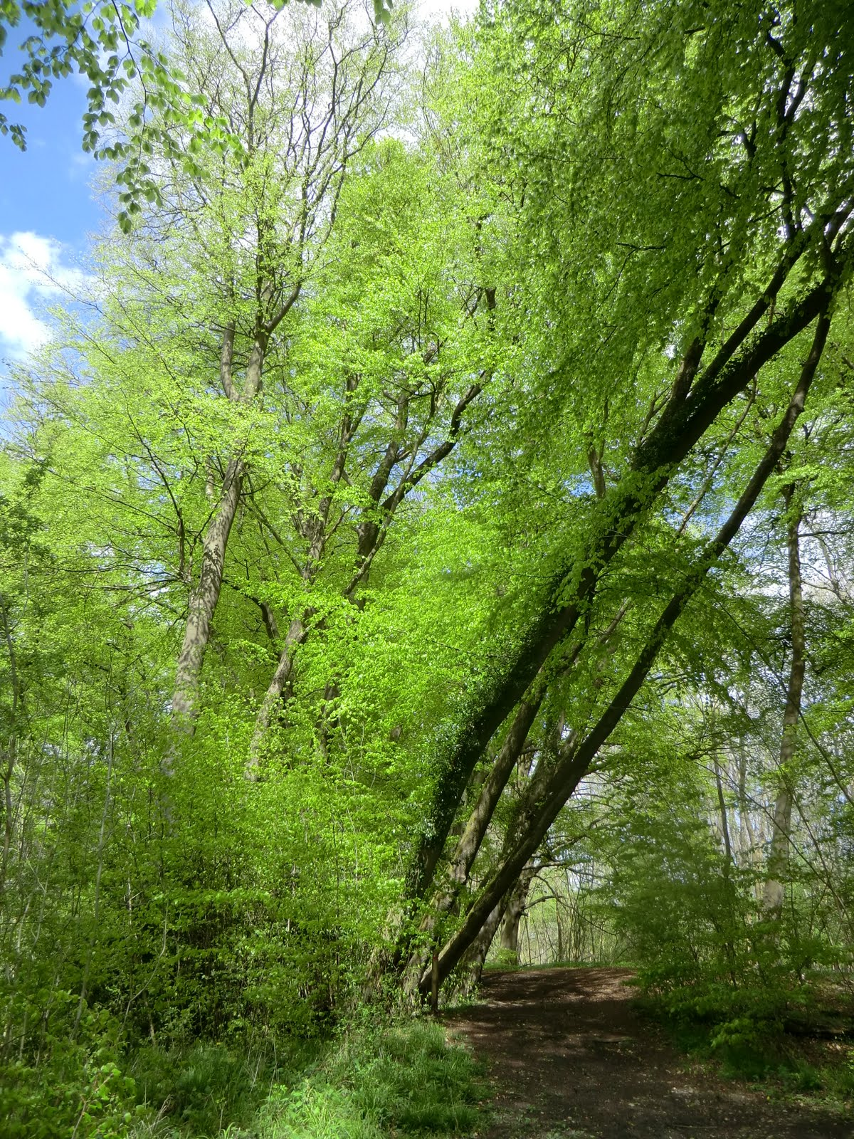 CIMG8011 Marden Park Woods