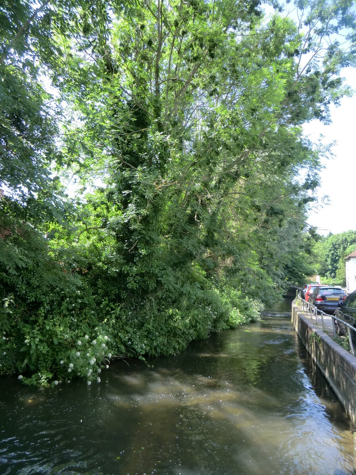 CIMG7490 River Darent at Shoreham