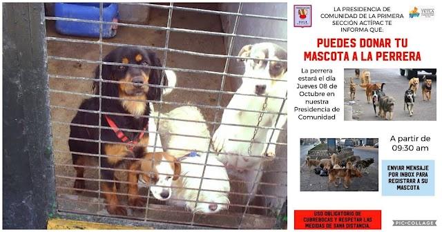 Invitan en Tetla a donar perritos a la perrera para después sacrificarlos 😔🥺