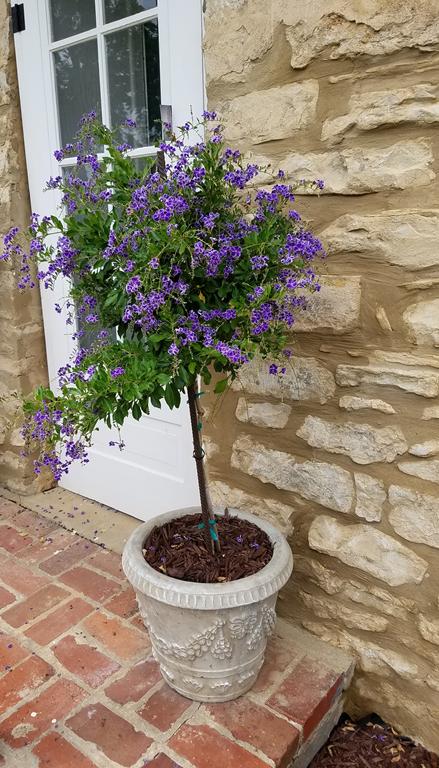 [topiary2%5B1%5D]