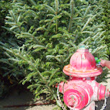 Christmastime - 116_6199.JPG