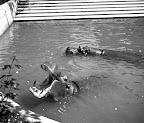 Vízilovak a budapesti állatkertben, 1942 (Fotó: Fortepan)