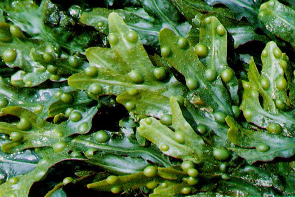 Plantas acu ticas cuidado de plantas - Jacinto planta cuidados ...