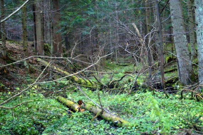Park Krajobrazowy Gór Słonnych, potok w rezerwacie