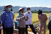 Tingkatkan Produktivitas, Mentan Dorong Petani Pangkep 3 Kali Tanam Dalam Semusim