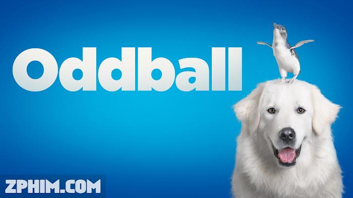 Ảnh trong phim Chú Chó Oddball - Oddball and the Penguins 1