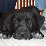 Dynamite Danes Family Album #3 - Rooby-first%2Bday%2Bhome%2B013.jpg