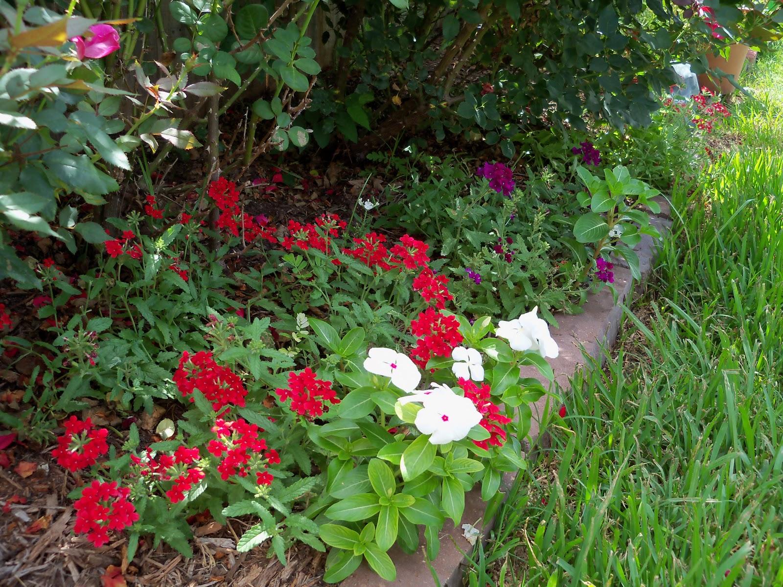 Gardening 2010, Part Three - 101_3826.JPG