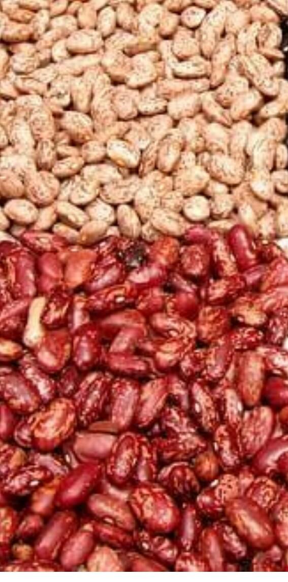 legumes (bean seed)