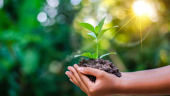 Gieo trồng hạnh phúc