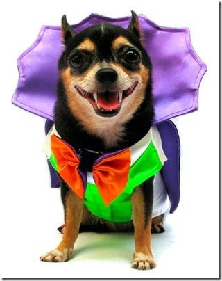 disfraces divertidos para perros  (8)