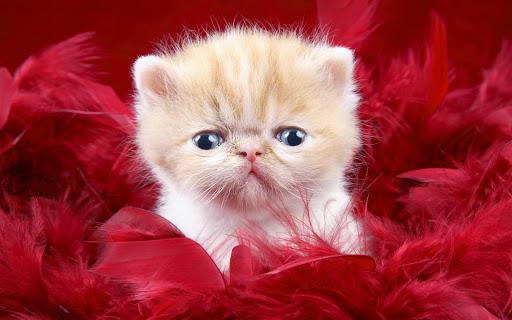 precious_cute_love-wide.jpg
