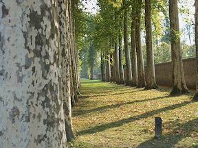 Birch grove, Château de Versailles