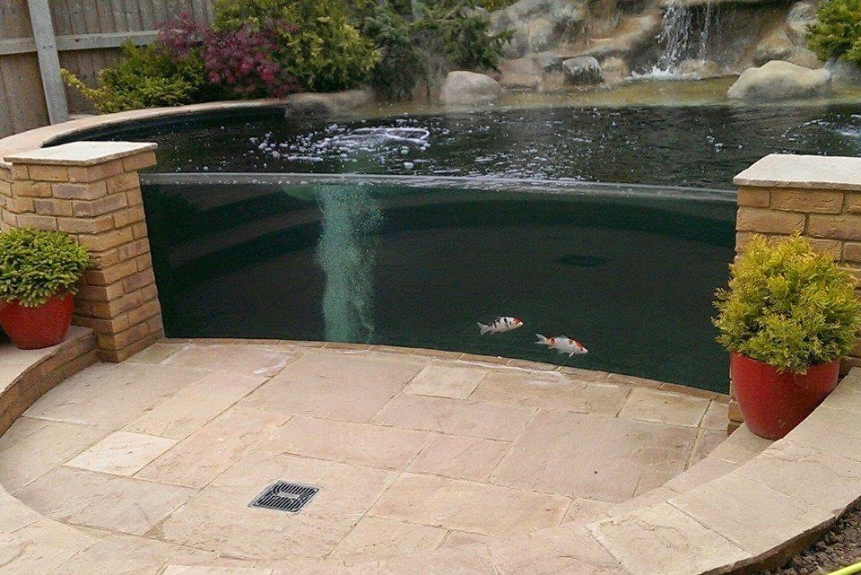 fantastic pond inside koi forum website