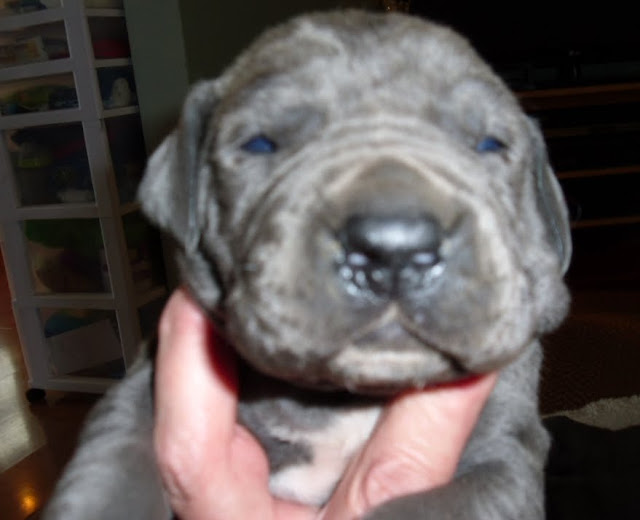 blue girl w/white shield on chest @ 2 weeks