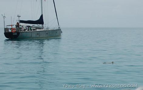 Barbuda - Tartarughe
