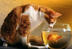Kucing dan ikan