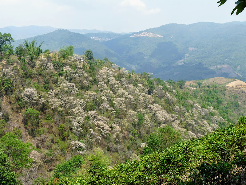 Chine: randonnée xishangbanna, région de Bada - Picture1%2B1032.jpg