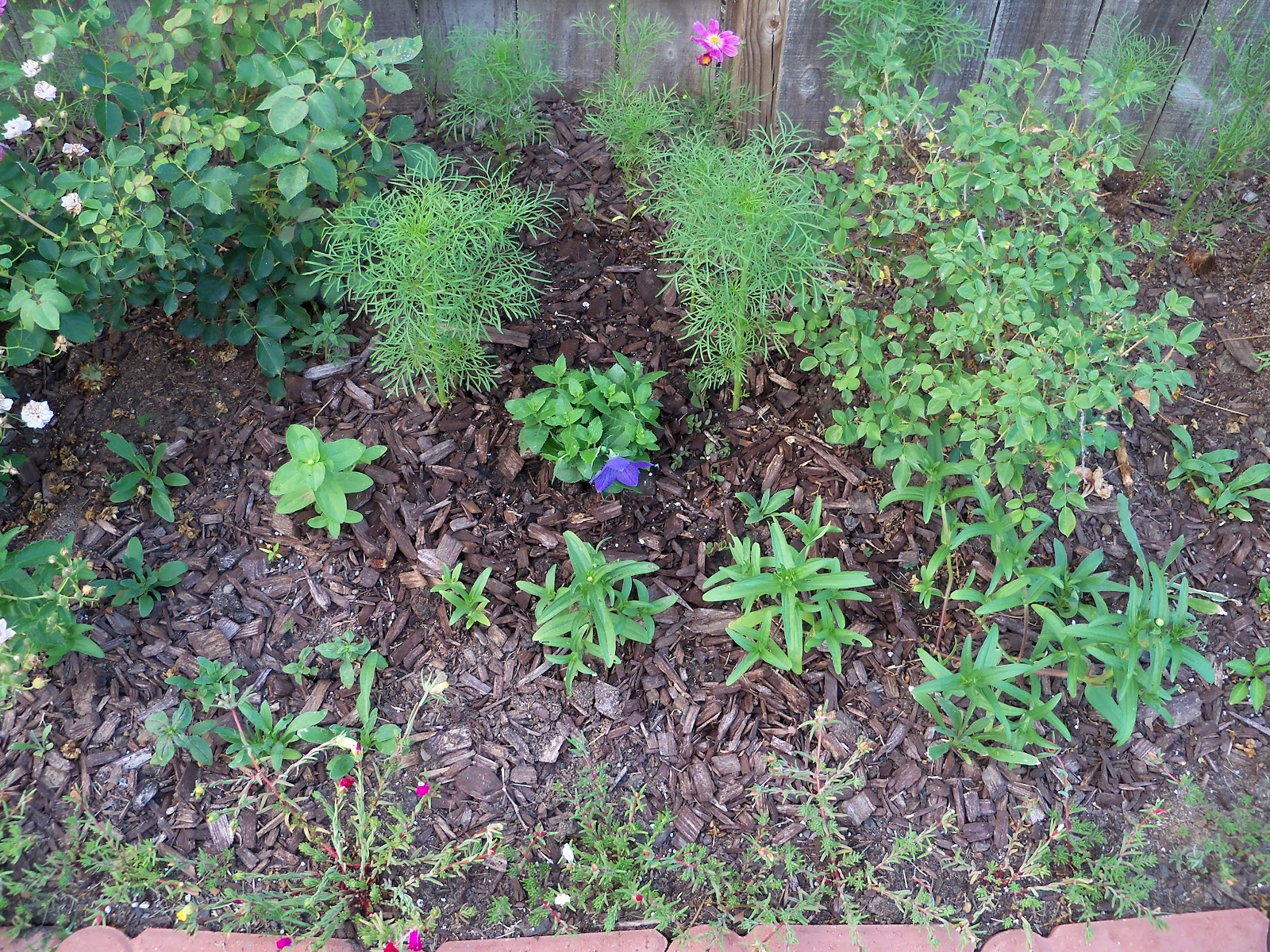 Gardening 2010, Part Two - 101_1994.JPG