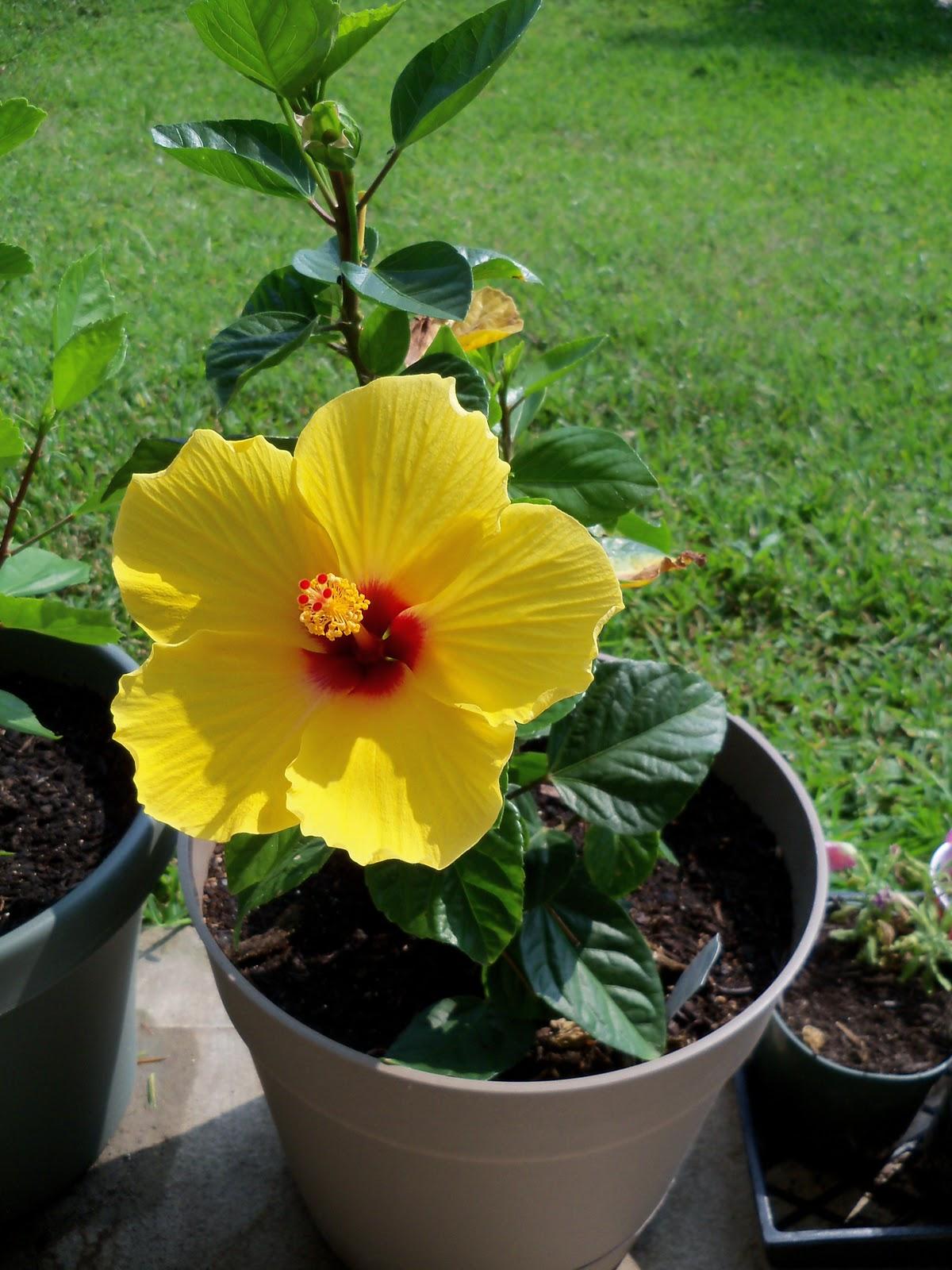 Gardening 2010, Part Two - 101_3134.JPG