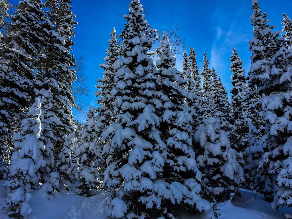 Snowshoeing White Pine - 1