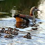Vogels en dieren - IMG_9311.JPG