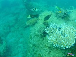 family trip pulau pari 090716 GoPro 49