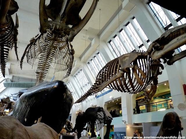 museo-ciencias-naturales-londres.JPG