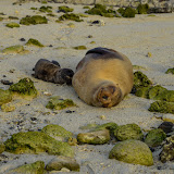 galapagos - Galapagos_FB_2-86.jpg