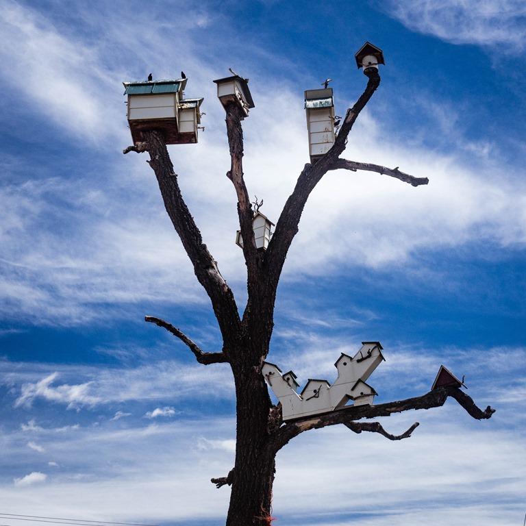 [Bird+House+Tree%5B5%5D]