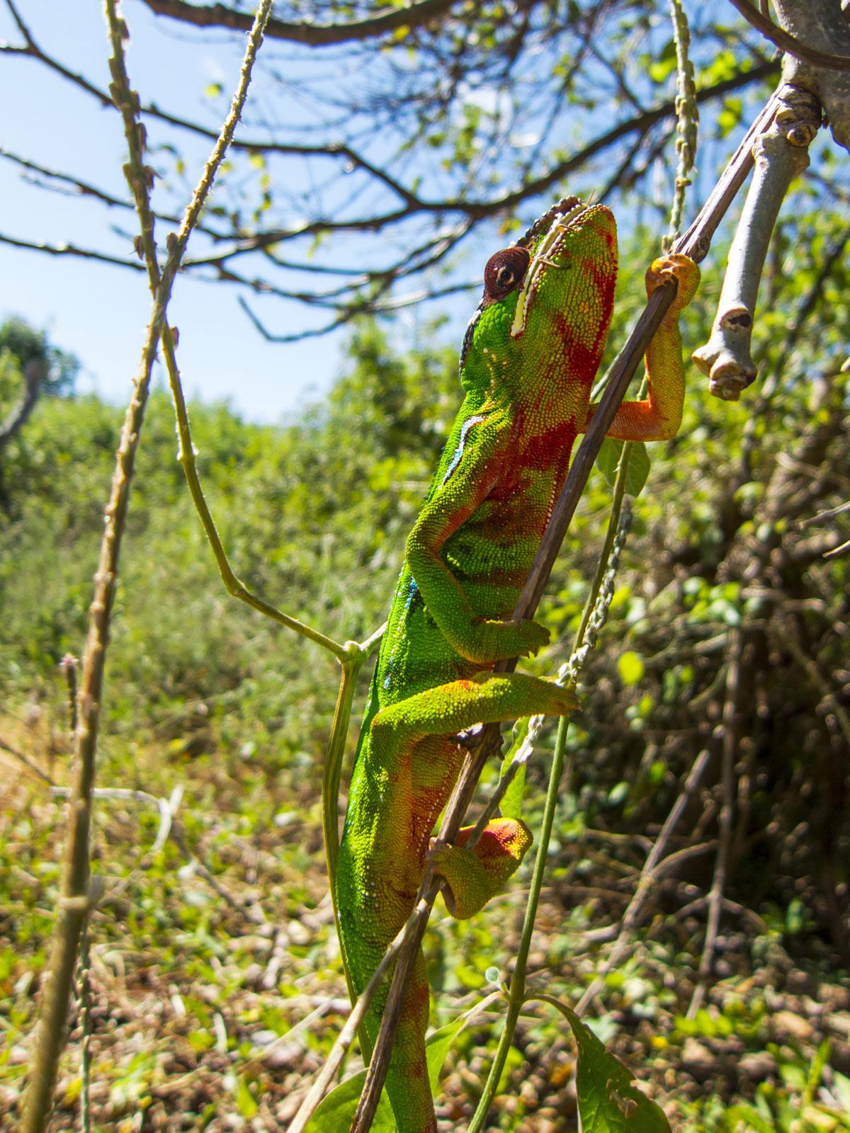 Madagascar9-086.jpg