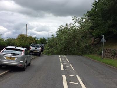 Tree blocks Kerry Road