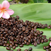 Kona Coffee Beans Online - Where to Buy Kona