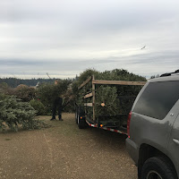 Christmas Tree Pickup - January 2017 - IMG_6997.JPG