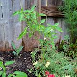 Gardening 2010, Part Two - 101_3207.JPG