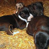 Star's girls at 4 weeks