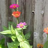 Gardening 2012 - IMG_3748.JPG