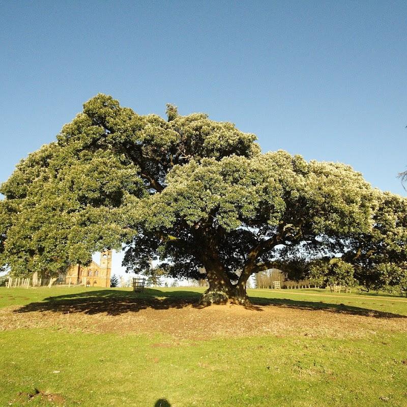 Stowe_Trees_12.JPG