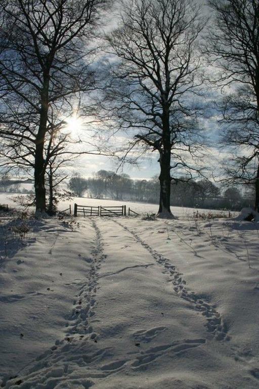 [snow+path%5B3%5D]