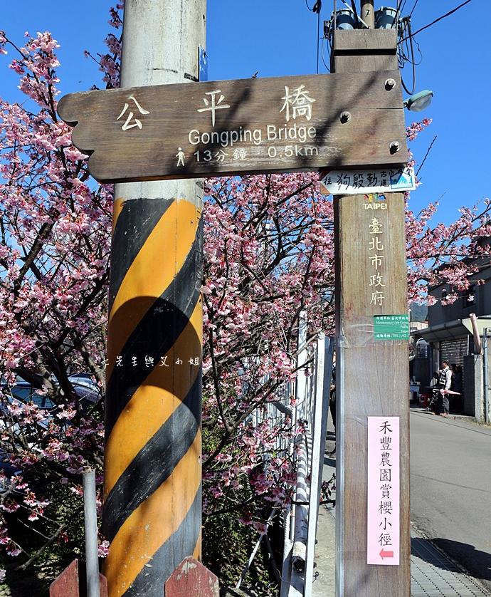 20 平菁街42巷櫻花