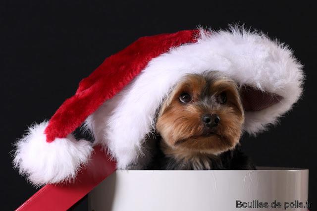 Bouilles de Poils - photos Studio - 2010-12-02%2Bbacchus%2B041.JPG