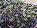April 20: Greenhouse