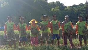 Nutrigrow plus Produk PT BMM Group Bermanfaat Bagi Petani Bawang Merah Bima.