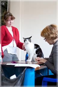 cats-show-24-03-2012-fife-spb-www.coonplanet.ru-075.jpg