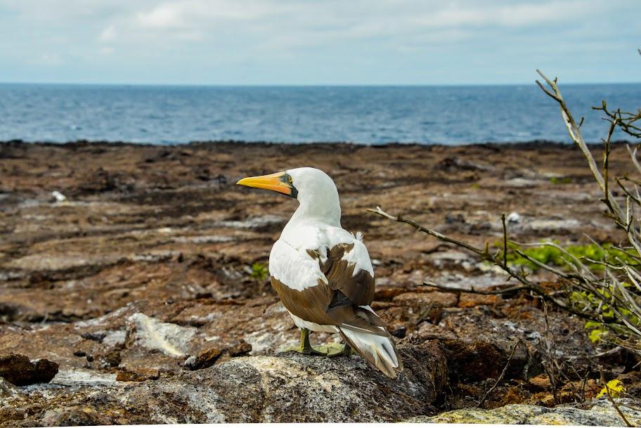 galapagos - Galapagos_FB_2-18.jpg
