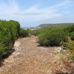 Track through heath to Coastal Track (113017)